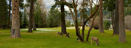 Deer and other wildlife abound on the Wallowa Lake Lodge grounds