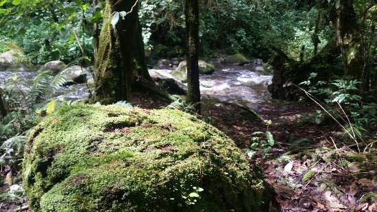 San Gerardo de Dota, Costa Rica: 20160717_092203_large.jpg