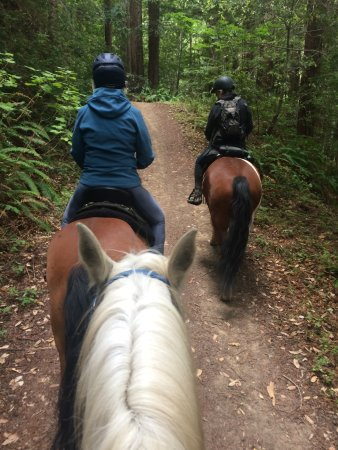 Bay Area Ridge Riders : out on the trail