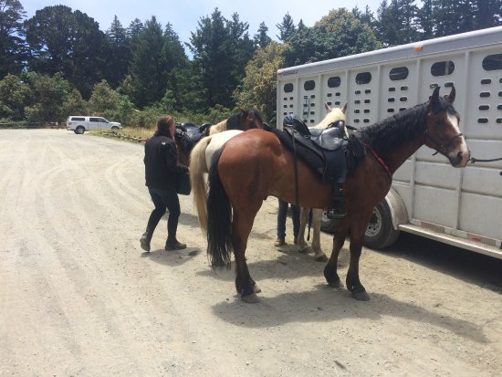 Bay Area Ridge Riders : waiting for well deserved treats