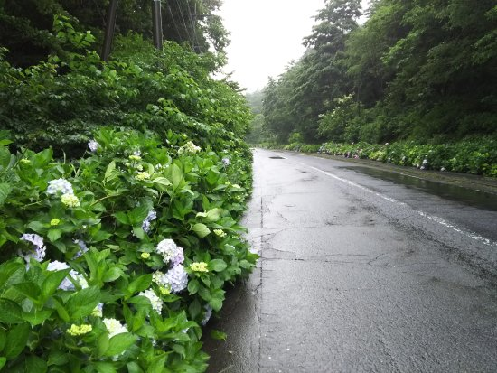 Ajisai Road