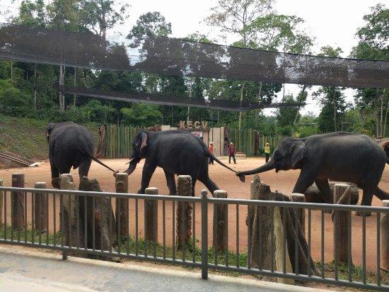 Kuala Berang, Malaysia: IMG_20160713_112012_large.jpg