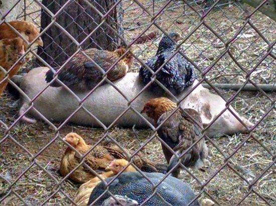 Yogi Bear's Jellystone Park Camp Resorts: Petting Zoo