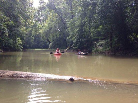 Paddle Dog Adventures