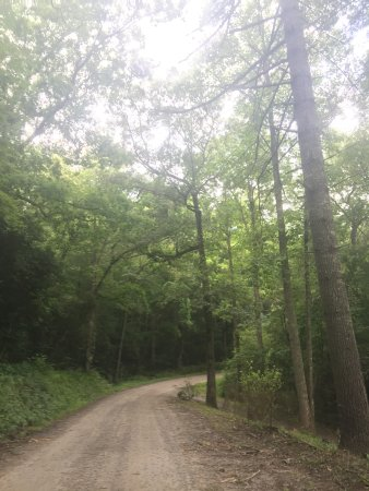 Hayesville, Kuzey Carolina: Road leading to the cabin