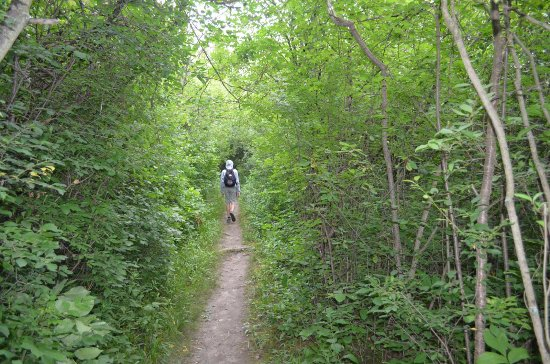 Westminster Ponds: Trails through the woods