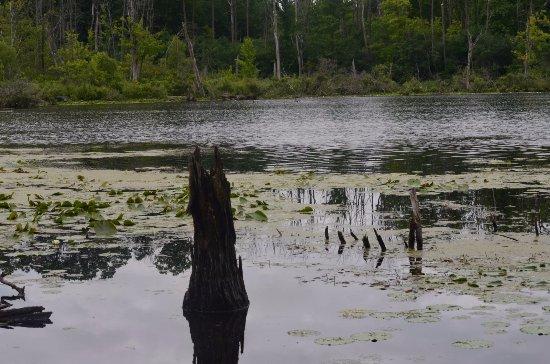 Westminster Ponds: Wild nature