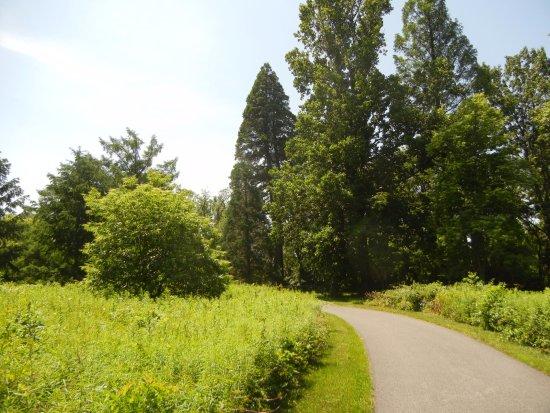 Media, Пенсильвания: Sequoia on the grounds