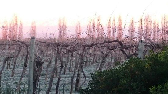 카바스 와인 로지 사진