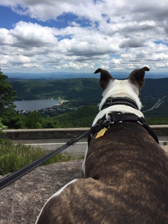 Prospect Mountain : Puppy made it all the way up to enjoy the beautiful view.