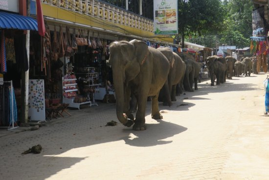 Pinnawala, Sri Lanka: photo2.jpg