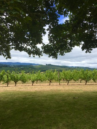 Forest Grove, Όρεγκον: Tualatin Estate Vineyards