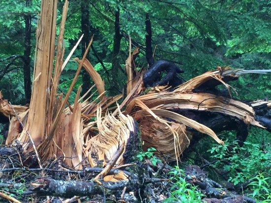 Denny Creek Trail: photo3.jpg