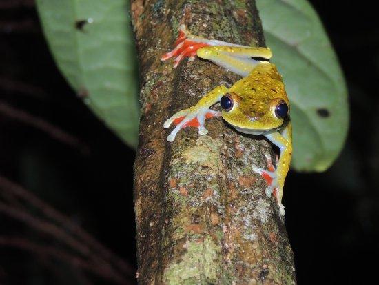 Sarapiqui, Costa Rica: frogging