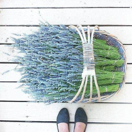Ladysmith, كندا: lavender basket