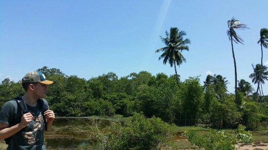 Kahandamodara, Sri Lanka: IMG-20160713-WA0017_large.jpg
