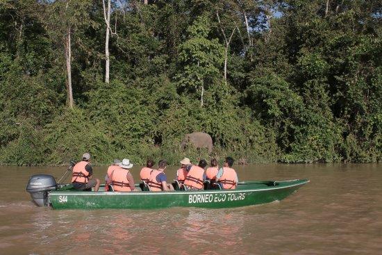 Sukau Rainforest Lodge: Witnessing elephants on the river cruise