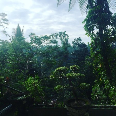 Heaven in the middle of the jungle