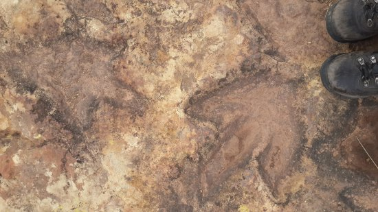 Fouriesburg, แอฟริกาใต้: Dinosaur footprints