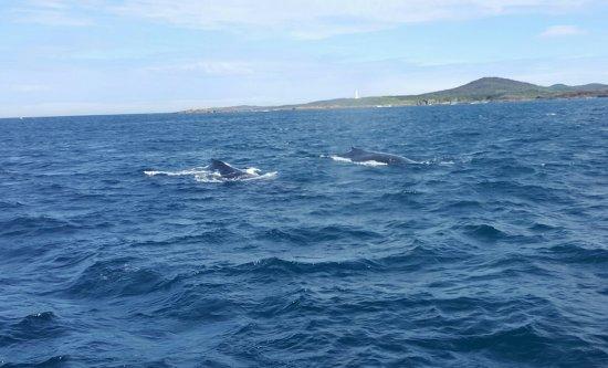Nelson Bay, Australia: 20160719_164958_large.jpg