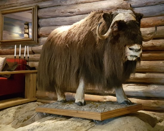 Spidsbergseter Resort Rondane: The Musk ox in the Villreinen bistro