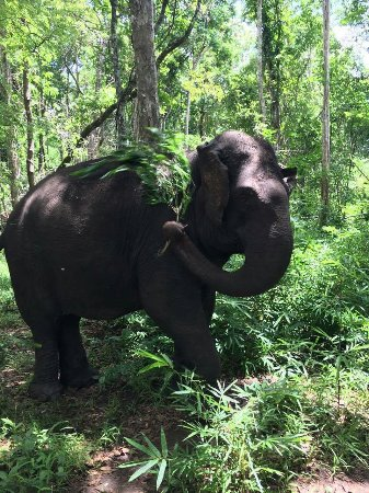 Sen Monorom, Cambodia: Elephant Community Project - Day Tours