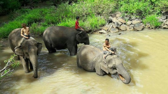 Sen Monorom, Cambodge : Elephant Community Project - Day Tours
