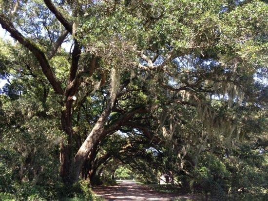 Wadmalaw Island, Carolina Selatan: Driveway