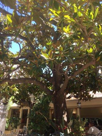 Hotel Le Magnolia : photo1.jpg