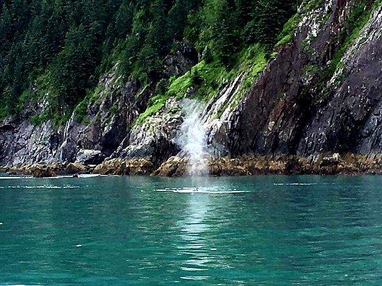 Allens Alaska Adventures ภาพถ่าย