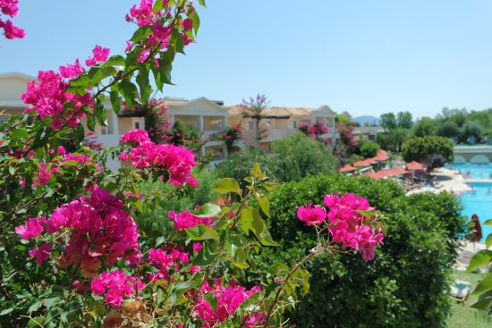 Bitzaro Grande Hotel: Beautiful flowers on balcony