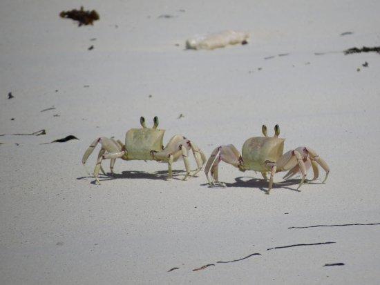 Makunduchi, Tanzania: Crabs