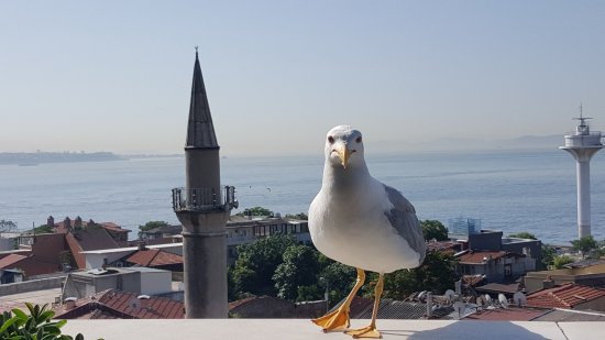 Zdjęcie Dersaadet Hotel Istanbul