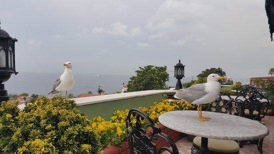 Dersaadet Hotel Istanbul Photo