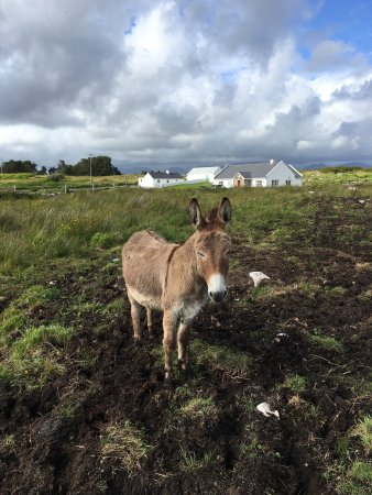 Inishnee, Ireland: View of Roundstone from B&B and donkeys!