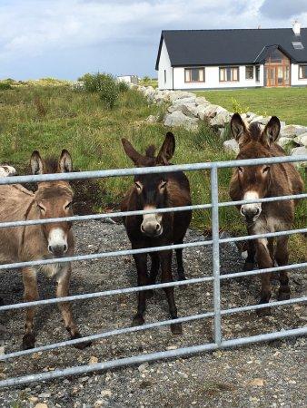 Inishnee, Ireland: View of Roundstone from B&B and donkeys!