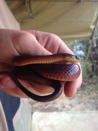 Bio-Ken Snake Farm: Just another day at the office for the Bio-Ken team.