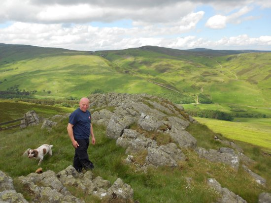 Wooler, UK: Lilly (dog) enjoying her walk in the Cheviot hills.