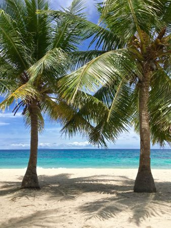 Malapascua Exotic Island Dive & Beach Resort: diving