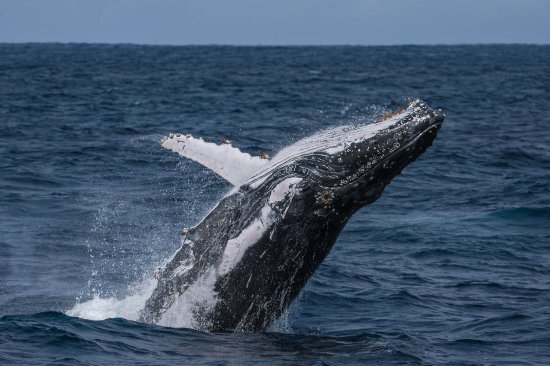 Albany, Australia: We saw around 6 different pods of Whales and most of them were breaching at least a little bit.