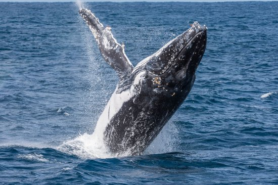 Albany, Australia: The Whales came close enough for a great photo but not so close as to be a worry.