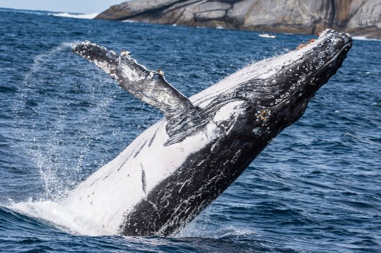 Albany, Australia: Awesome display by the Whales today, so happy we were able to make the trip, thanks Paul and Kar