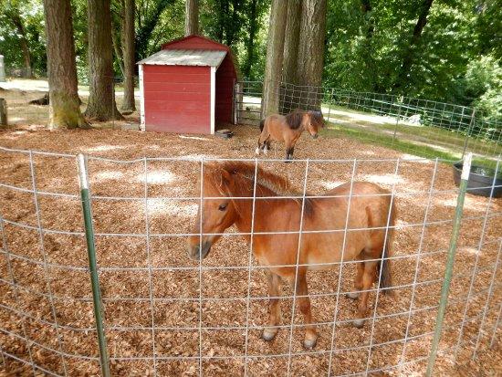 Aurora, Όρεγκον: Ponies