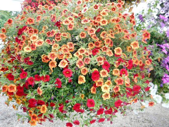 Aurora, OR: Beautiful hanging baskets