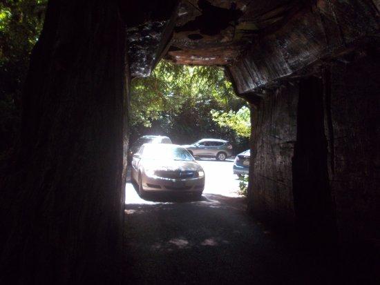 Klamath, CA: Drive through the tree