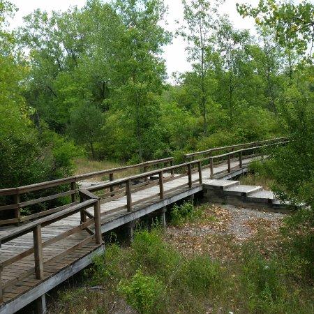 Tillman road wildlife management area