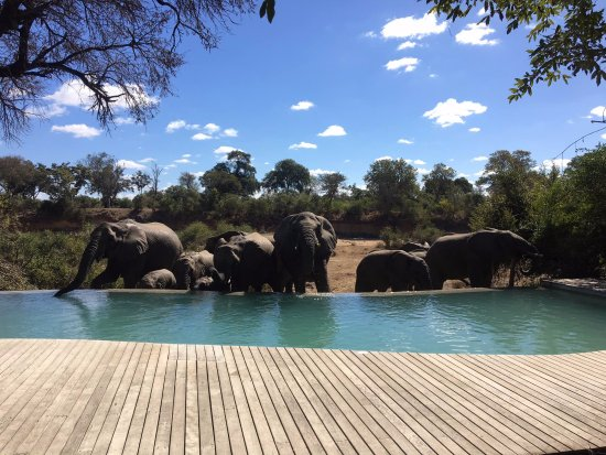 Ngala Private Game Reserve, Sudafrica: Visitors at the pool!