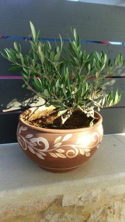 Parigoria, กรีซ: DSC_0020 (1)_large.jpg