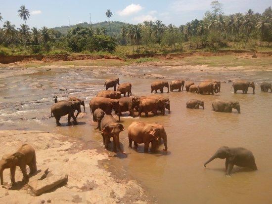 Pinnawala Elephant Orphanage !