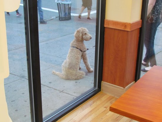 Astoria, État de New York : Dog obiendly waiting for its master who is buying ice cream.